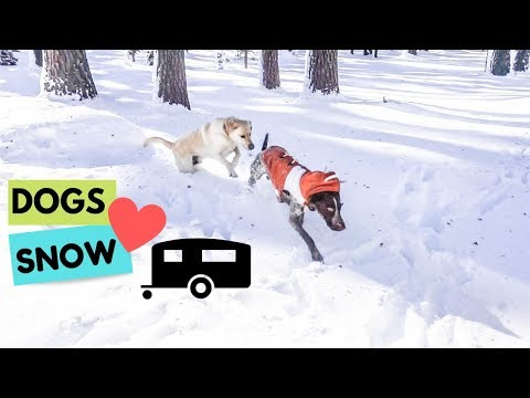 Dog's first time in the snow (3 of 3)