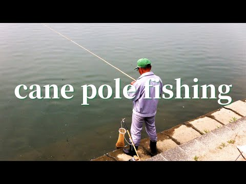 Cane Pole Fishing By Old  Master Fisherman