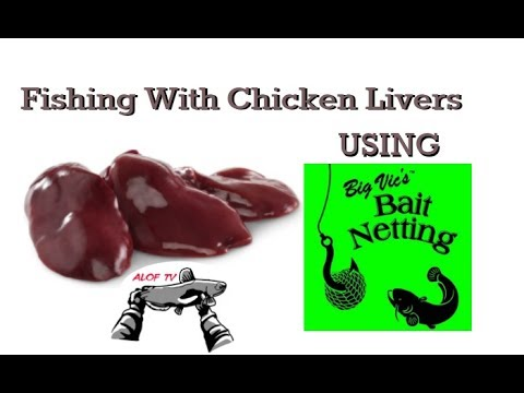 Fishing with chicken livers using big vic 39 s bait netting for Fishing with chicken liver