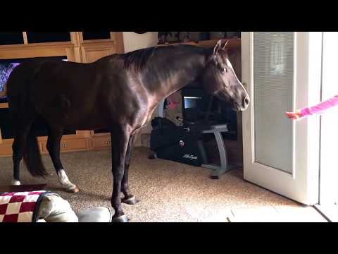 My Horse In My House