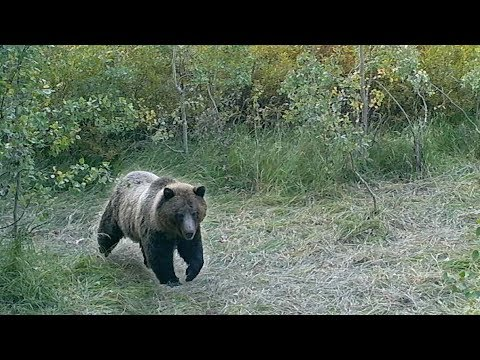 I SHOT MY GRIZZLY BEAR SPRAY - EP 20 - LAND OF THE FREE