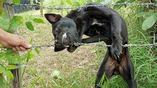 Wow!!! The dog trapped with barbed wire, How can we help it? | Life of Natural Foods