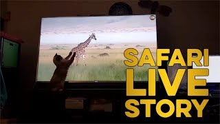 safariLIVE Story: Your Pets React to safariLIVE! thumbnail