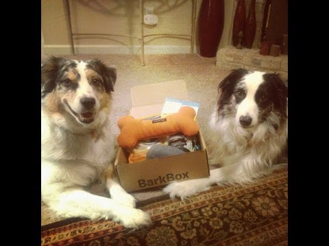 paws-for-review:-barkbox-(march-2013)