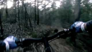 Sneaky Mt Cootha Mtb Session With Tui The Trail-dog
