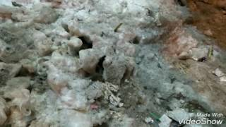 Крысята атакуют Новосибирск