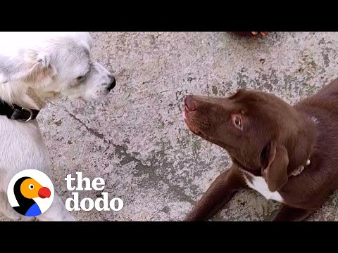 Rescued Stray Dog Gets The Perfect Sister   The Dodo Heroes