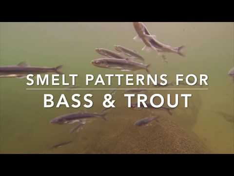 Smelt & Baitfish Patterns For Trout & Bass