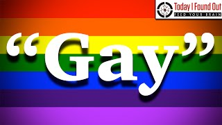 "Why are Homosexual People Called ""Gay""?"