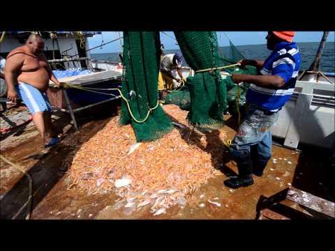 Suriname seabob trawling
