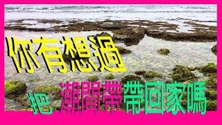 『水族系列 ep15』水族教學 | 淡水海水皆可用的藻類系統!!!!ATS藻屏!!