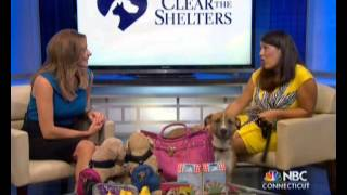 The Pet Lady Celebrates National Dog Day With Frank In Hartford Ct On Nbc On 9/26/15
