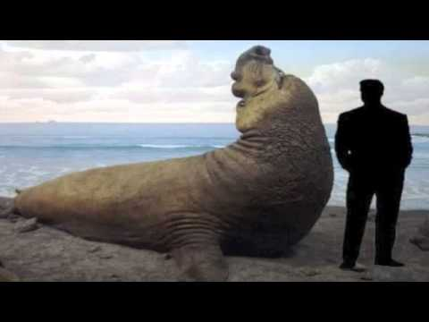 25 Largest Animals On Earth