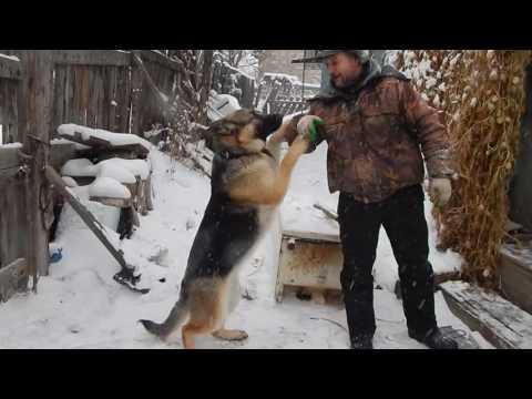 вольер для немецкой овчарки (часть 3)