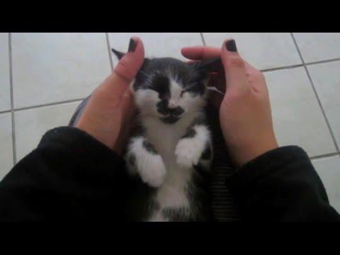 ASMR - Kitten Massage | Purring, Snoring, and Mewing