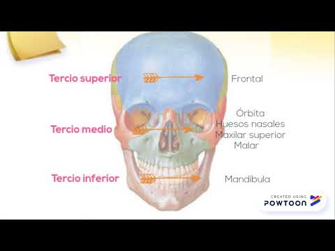 Anatomia Quirurgica de los Maxilares - YouTube
