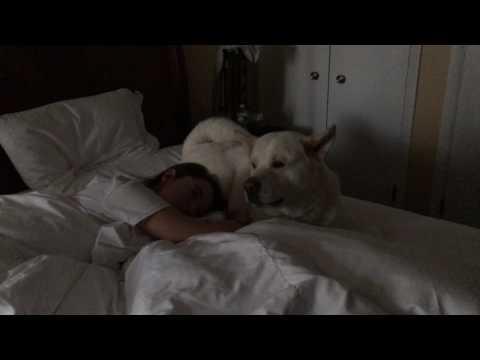 Akita Attacks Daughter with Kisses 12_13_16 kumason.com