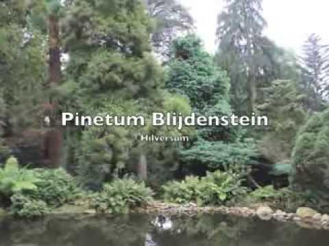 Coniferen in de tuin pinetum blijdenstein youtube - Outs zwembad in de tuin ...