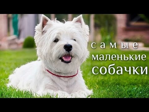 Актриса Луговая Мария: биография, фото. Лучшие фильмы и