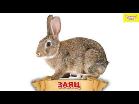 Животные для детей, Знакомим детей с животными. Обучающее видео для детей