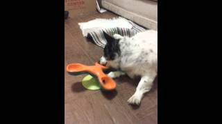 4-24-2015 Sammy Reviews The Outward Hound Treater Totter