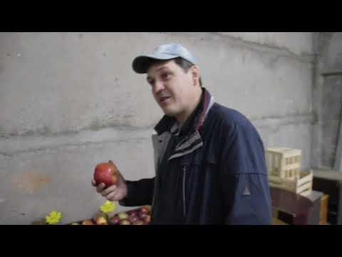 Фермер рассказал о проверенных сортах белорусских яблок