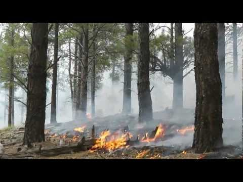 FORESTS UNDER FIRE DOCUMENTARY