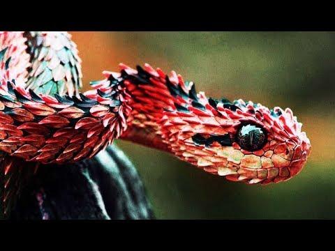 Год Змеи - женщина