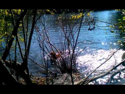 Woofs at Saxon Woods Lake