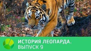История леопарда  Выпуск 9 | Живая Планета