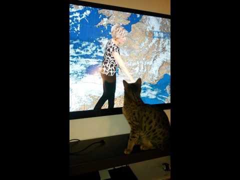 Africa regarde la météo...