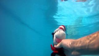 Cat in the Hat passes by Underwater