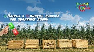 Обзор ящиков для хранения яблок. Украинский производитель