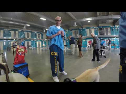 Paws For Life Boot Camp Video with Sally & Aspen (PTSD Dog)
