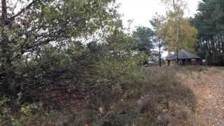Im Wald und auf der Heide 05