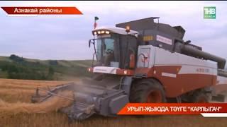 Азнакайда урып-жыю башланды - ТНВ