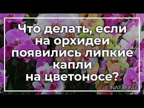 Что делать, если на орхидеи появились липкие капли на цветоносе? | toNature.Info