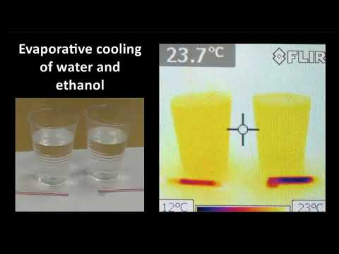 Evaporative Cooling of Water and Ethanol