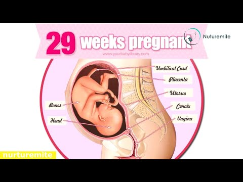 29 Weeks Pregnant: Your Baby's Development, Symptoms, Tips, and many more-Nuturemite English