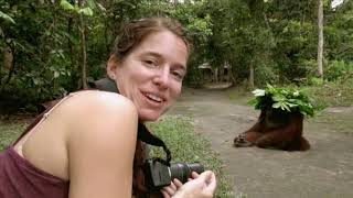 Walking with the Great Apes-ORANGUTANS