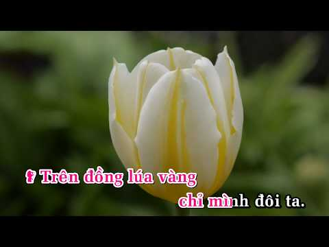 Trên đồng lúa vàng - Dương Hồng Loan ft Quách Thành Danh karaoke