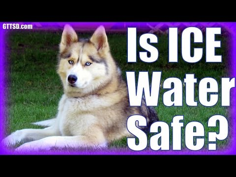 Is ICE WATER SAFE For DOGS? | Fan Friday 159
