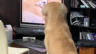 テレビを見るアムロ