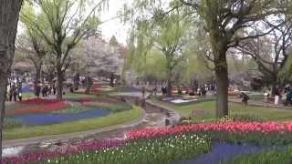 Японские тюльпаны парка Сёва (2часть) /Tulpan Flower Festivals in Showa Kinen Park Japan.(, 2014-04-16T17:06:08.000Z)