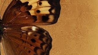 Венецианская штукатурка ДЕКОРАТИВНАЯ ФРЕСКА АРАВИЙСКАЯ мастер класс DECORATIVE PLASTER Урок 2
