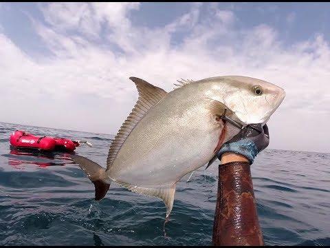 GoPro Spearfishing Agadir Morocco #6 , Haumard , Badejo , Seriole , Seiche , Baliste , Sar .....