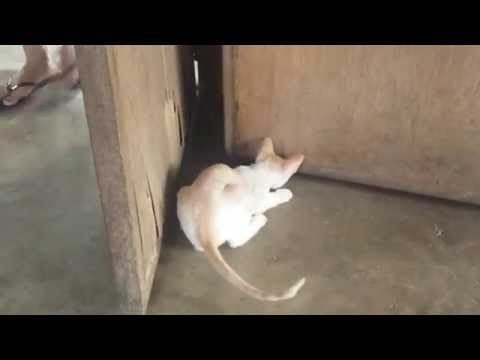 Skinhead Cats: Skinhead Cats Funny Cat Fight Very Cute Very Funny