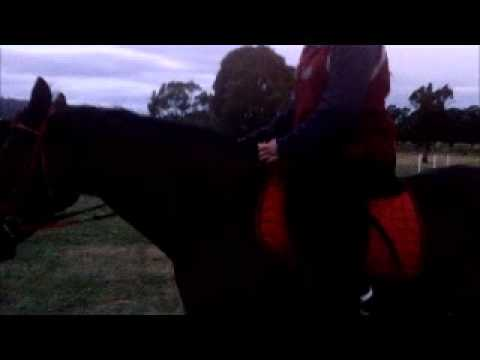 Darcy ridden by Tylah and Jordan