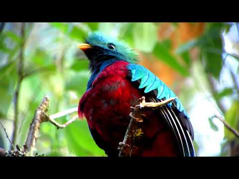 Los Quetzales National Park and Coope-Dota Coffee Experience - Video
