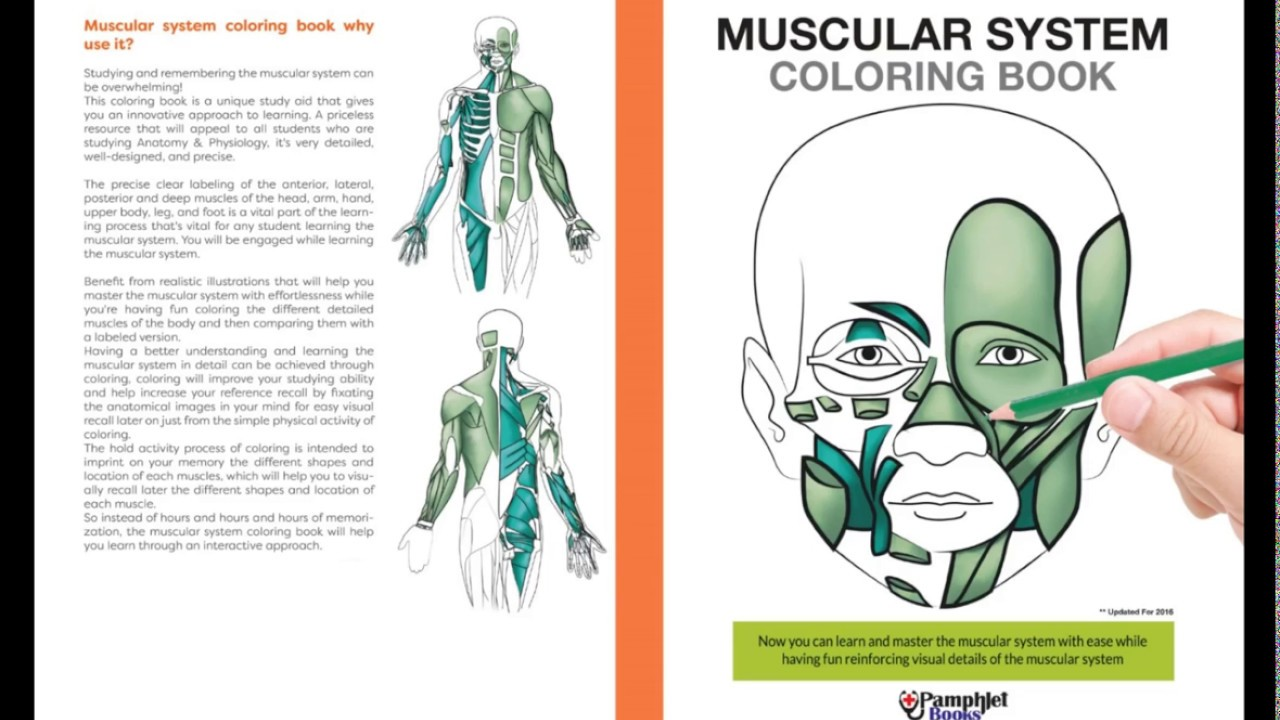 Anatomy Coloring Book Muscles